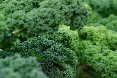 green leafy kale vegetable in Marathi