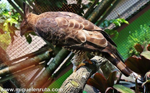 Centro-conservación-aves-Taman-Mini