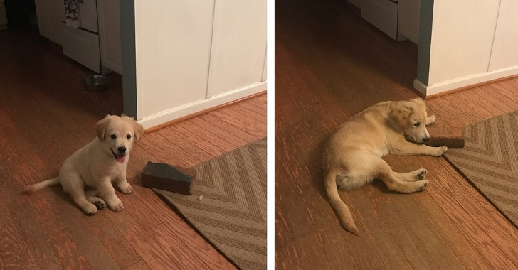23 Incredibly Hilarious Pictures Of Dogs Being Dogs