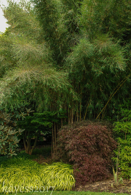 Gardenbook throwback thursday linda cochrans garden