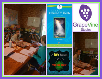 Grapevine Studies - A Review