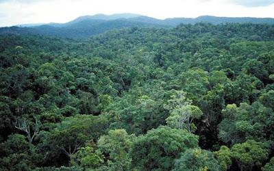 buxwaha forest diamond lease controversy , बक्सवाहा के जंगल , हीरों का खनन