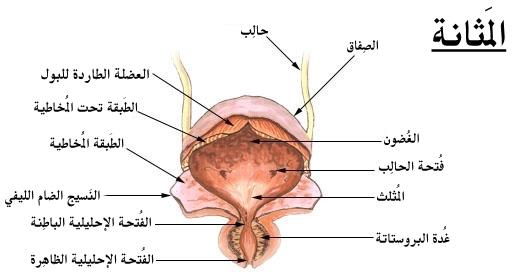 اسباب التهاب المثانة