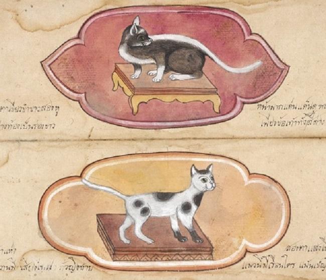 Un tratado sobre gatos