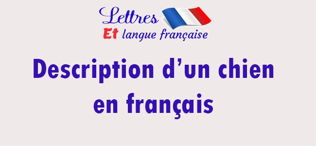 Description d'un chien en français