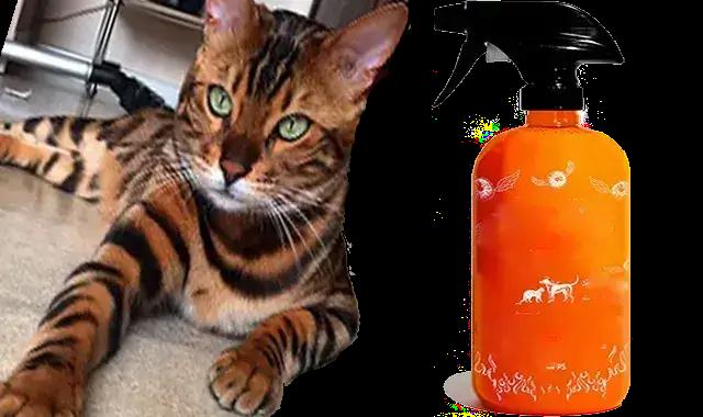 Meilleur Spray D'Élimination Des Odeurs Pour Les Chats Du Bengal