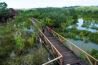 wisata hutan payau