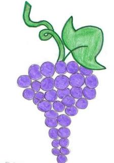 grape sketch