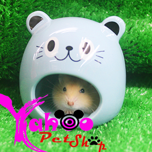 Nhà ngủ sứ dành cho hamster và hamster bông lan