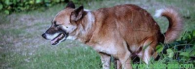 ollie dog food diarrhea