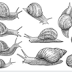 How To Make Money From Snail Farming