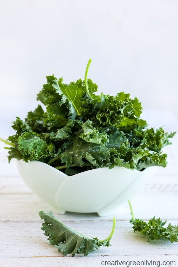 How to make dehydrator kale chips! This easy recipe is seriosuly the best! It's easy to make crispy kale chips in your dehydrator. This is the best way to get crispy and healthy kale chips that are keto, paleo and whole30 compliant. #creativegreenliving #creativegreenkitchen #kalechips #dehydrator #bestkalechips #easykalechips #saltandvinegar