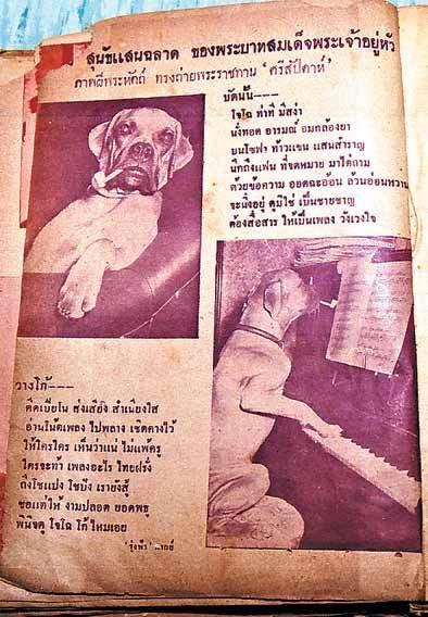 โจโฉ คาบไปป์เล่นเปียโน