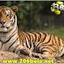 Misteri Penampakan Harimau di Desa Tongging Karo