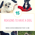 15 Reasons To Have A Dog