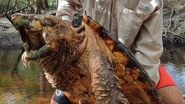 Dinossauros Tartaruga