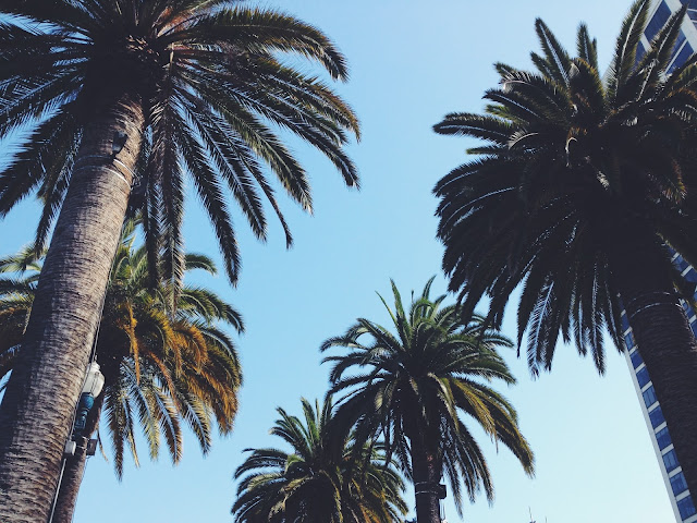 Palm Trees on Embarcadero in San Francisco