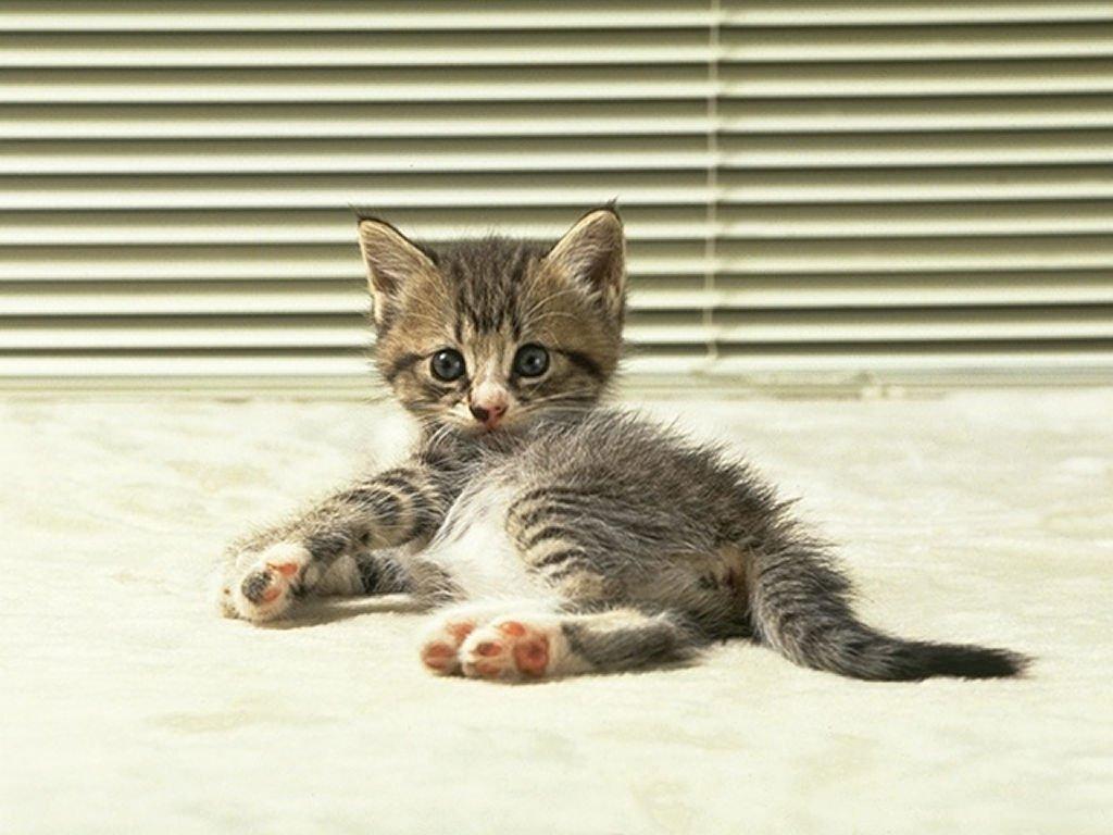 trio de bonne nouvelles sur fond de petit chaton trop mignon