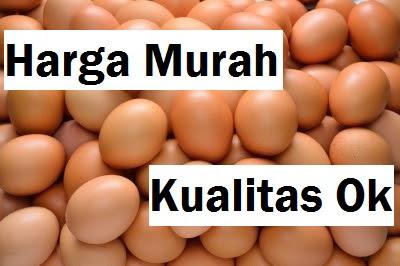 Jual Telur Ayam Ras Daerah Tamiang Layang