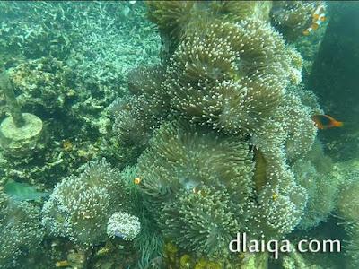hasil foto bawah air (2)