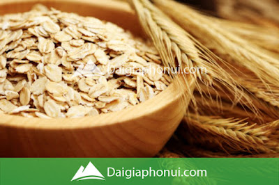 Yến Mạch - Oats/Oatmeal - Dai Gia Pho Nui