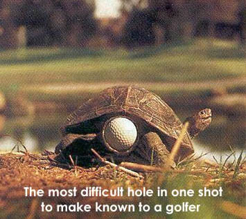 Turtle funny - photo#54