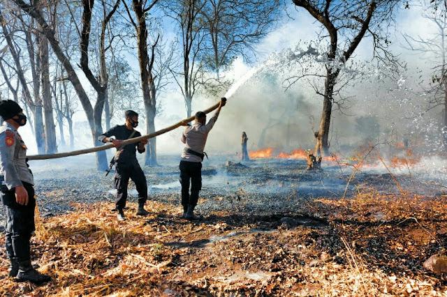 Kebakaran lahan di Sumbawa, api berhasil dipadamkan kurang 2 jam