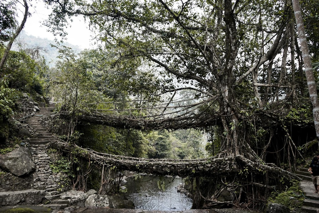 TheQuirkyminimal by Kangkan Rabha Menswear style & lifestyle blog Living Root Bridge, a UNESCO Heritage,Double Decker Living Root Bridge,Living Root Bridge Guide, Living Root Bridge Meghalaya