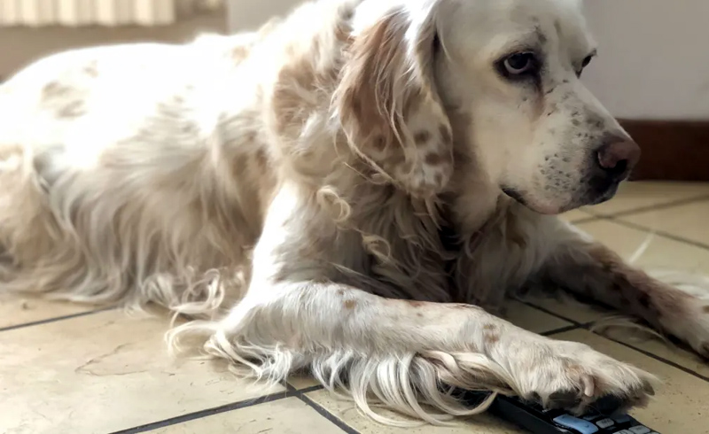 What Do Pets See When They Watch Television?