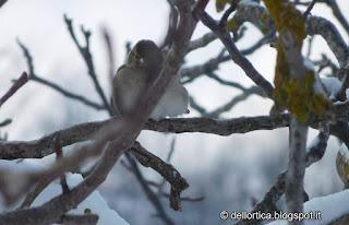 orto rose bologna savigno valsamoggia ortica uccelli neve topo