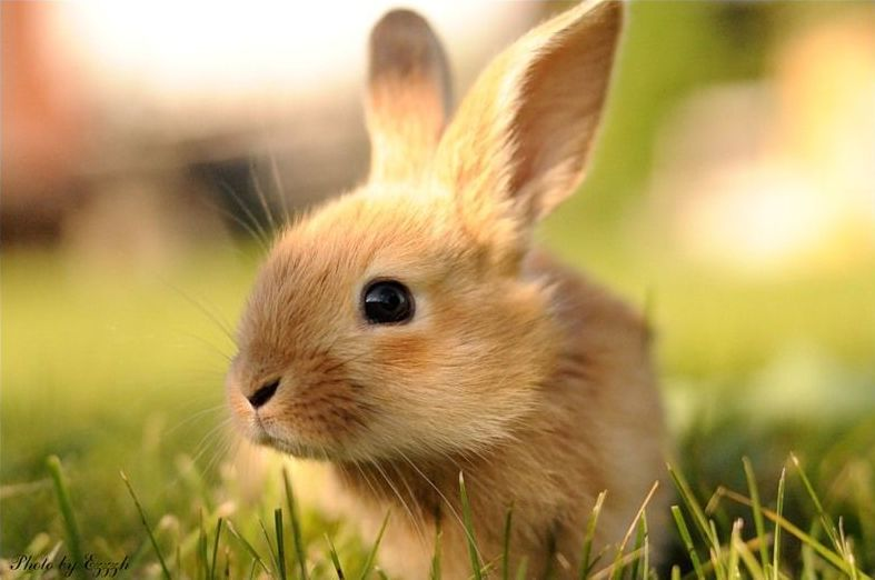 Cute bunny pictures that will make you say aww 30 pics