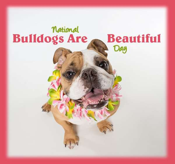 National Bulldogs Are Beautiful Day Wishes Images download