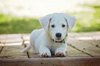 foto profil anjing