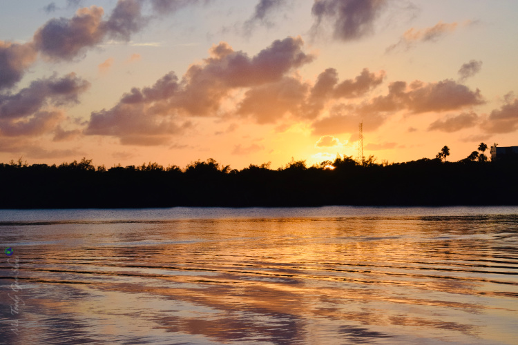 Florida Sunsets - Ms. Toody Goo Shoes