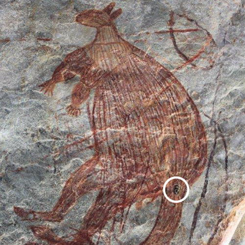 Tinuku Scientists report Kimberley rock art in Australia at least 36,000 years ago