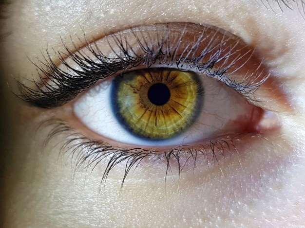 Manfaat daun kelor untuk mata dan cara pengolahannya