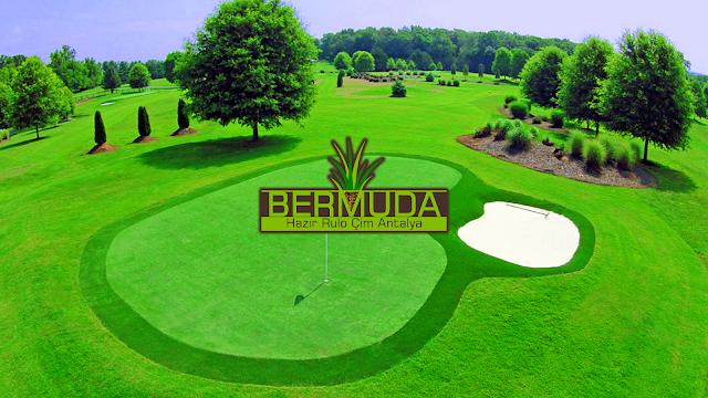 SPOR ALANLARI RULO ÇİM ANTALYA Bermuda