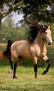 Horse images,