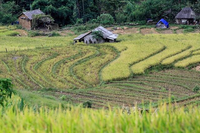 Ngắm cảnh sắc 'thiên đường' ruộng bậc thang hùng vĩ ở Y Tý Lào Cai 10