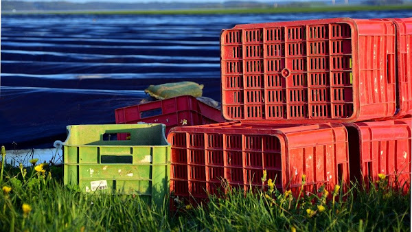 Image: Asparagus Time and Crates, by Ulrike Leone on Pixababy