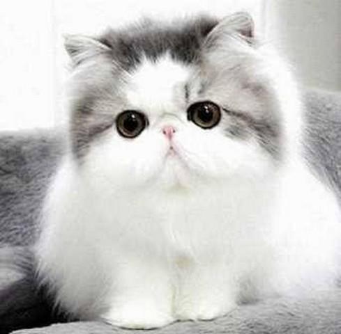 96 Gambar Kartun Kucing Lucu Dan Imut Banget Keren Cikimm Com