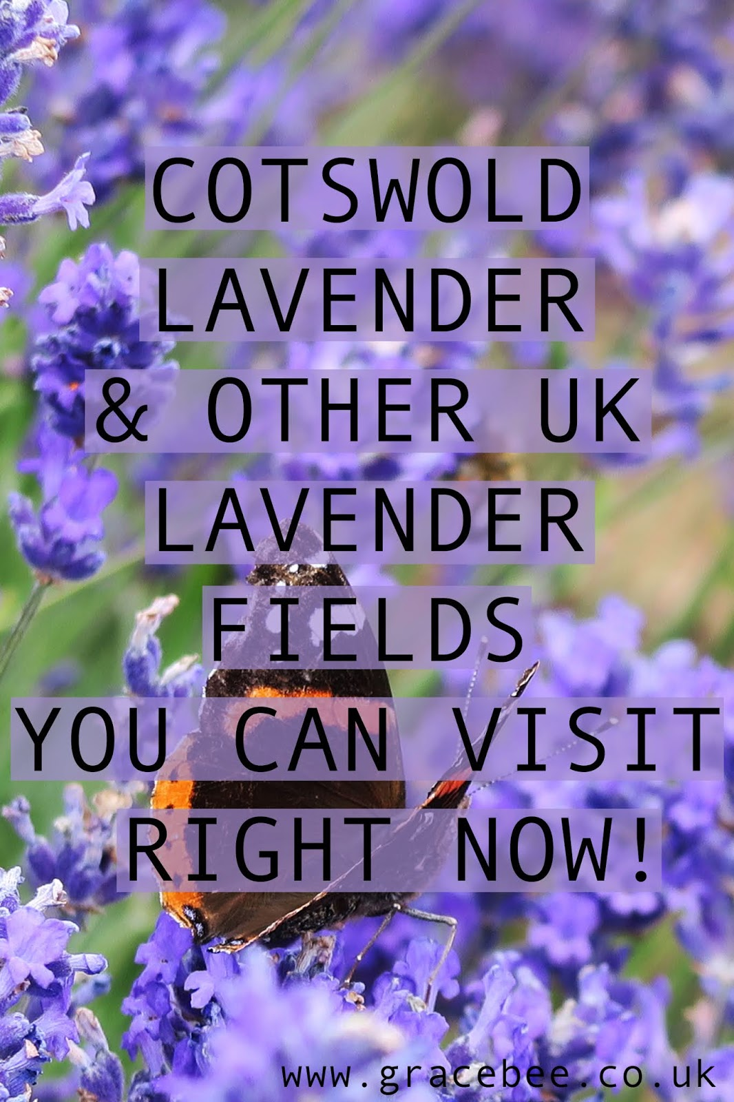 a Pin for pinterest. The text reads -  COTSWOLD LAVENDER & OTHER UK LAVENDER FIELDS YOU CAN VISIT RIGHT NOW!