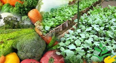 Pengertian Agrikultur Dalam Arti Luas di Indonesia