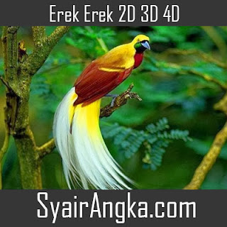 Erek Erek Burung Cendrawasih di Buku Mimpi 2D 3D 4D Lengkap