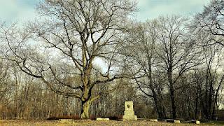Pomnik Mickiewicza obok dąb amerykański