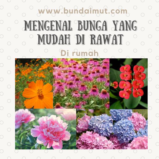 Mengenal jenis bunga yang mudah dirawat