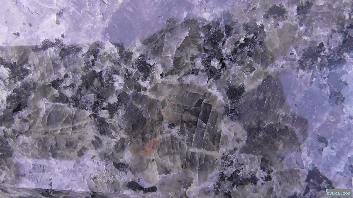 トビイロヒョウタンゾウムシ