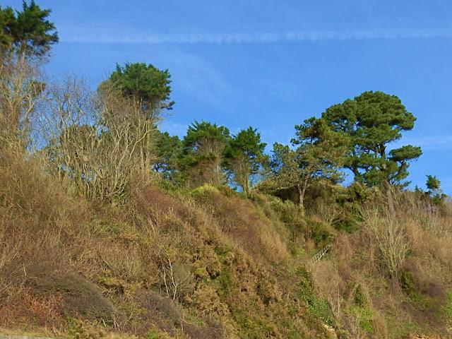 Ckiffs on the cliffs at Porthpean, Cornwall
