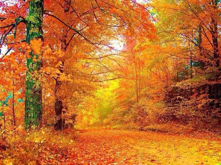 sonbaharda orman temalı resimler