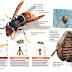 VESPA ASIÁTICA - Município promove ação de formação para apicultores e população em geral
